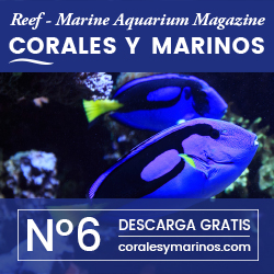 Corales Y Marinos