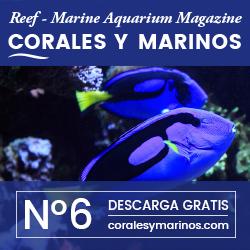 Corales Y Marinos